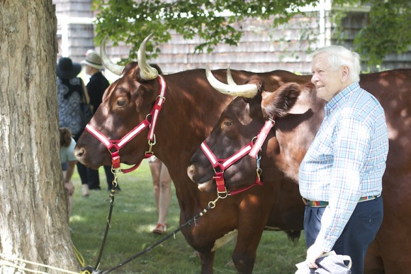 Meet the oxen from Cranberry Meadow Farm on the lawn of the Lyme Art Association.