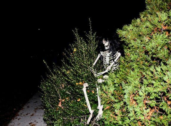 skeleton_in_bushes