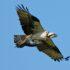 CT Audubon RTPEC Offers Estuary Explorations Saturday Mornings