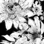 'Black and White' Opens at Cooley Gallery, Saturday