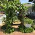 Old Lyme's Children's Learning Center Creates a Delicious 'Edible Garden'