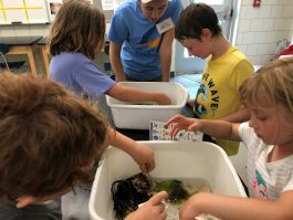Children investigate the contents of their Touch Tanks!