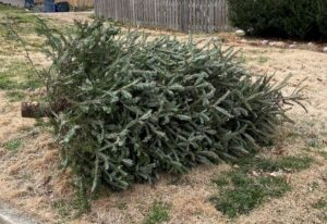 Christmas Tree Pickup in Old Lyme @ Old Lyme