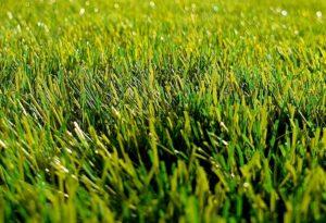 Presentation on Pollinator-Friendly Lawns via Zoom @ Virtual
